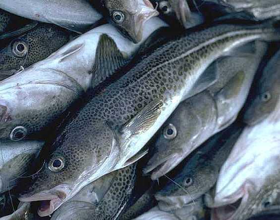 Boston Marine Industrial Park Seafood Exchange